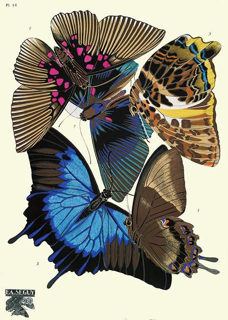 008-Papillons vingt planches en phototypie coloriees..1928- Eugene Alain Seguy