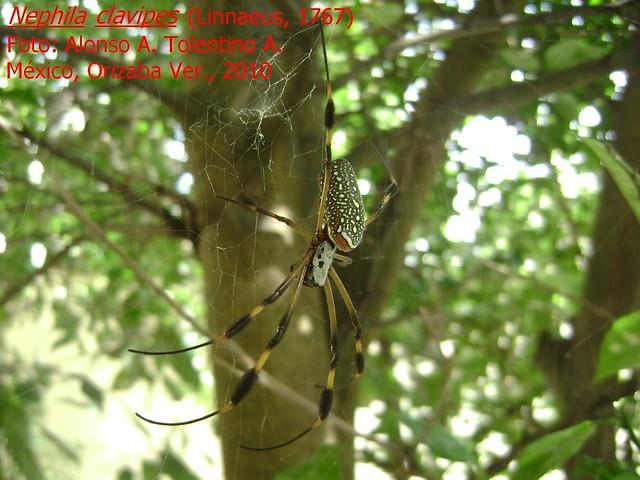 ¿Qué son las arañas? 4753338089_91b7960216_z
