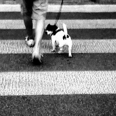 Are you following me ? (RosLol) Tags: street blackandwhite bw dog cane strada candid arturo biancoenero lifeinthecity roslol