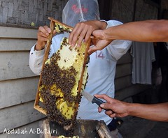 (Abdullah Al-Butairi) Tags: indonesia natural bee honey