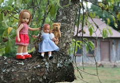 Sara, Wee Patsy and Tiny Bear Hang out in the Peach Tree (Crazyquilter) Tags: sara arkansas ourhouse redridinghood 567 tinybear 5inches nancyannstorybookdoll effanbee nasb oneobject365daysproject weepatsy