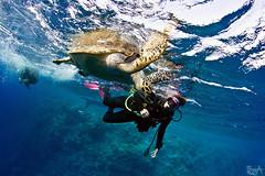 The beautiful encounter (Lea's UW Photography) Tags: underwater turtle redsea fins schildkröte unterwasser tokina1017mm canon7d leamoser