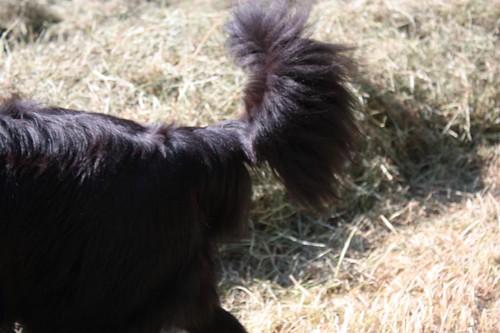 Salli's tail