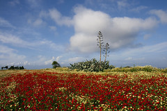 (esther**) Tags: flowers blue trees red summer sky colors field yellow clouds daisies landscape spring explore greece poppies frontpage rhodes