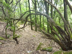 Chemin de descente de Presarella sur Giannucciu