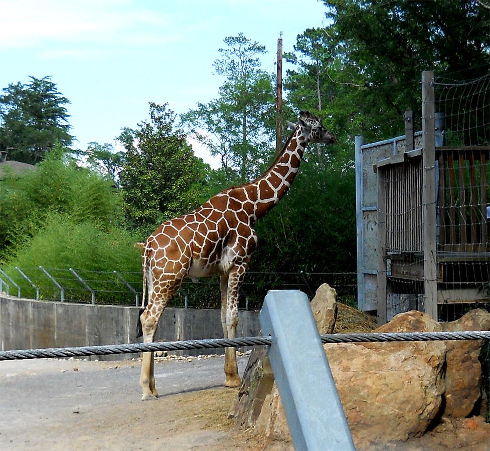 Zoo2010_009