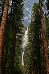 Upper and Lower Yosemite Falls (Carol Bauer) Tags: california travel trees nature canon landscape yosemite yosemitenationalpark highsierra 30d upperandloweryosemitefalls carolbauer