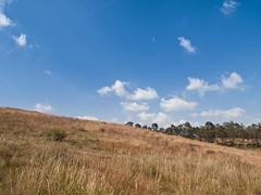 Imagen 01 (cguevara_aguilar) Tags: cielo árbol nube ‡rbol rbol cerrozapotecas