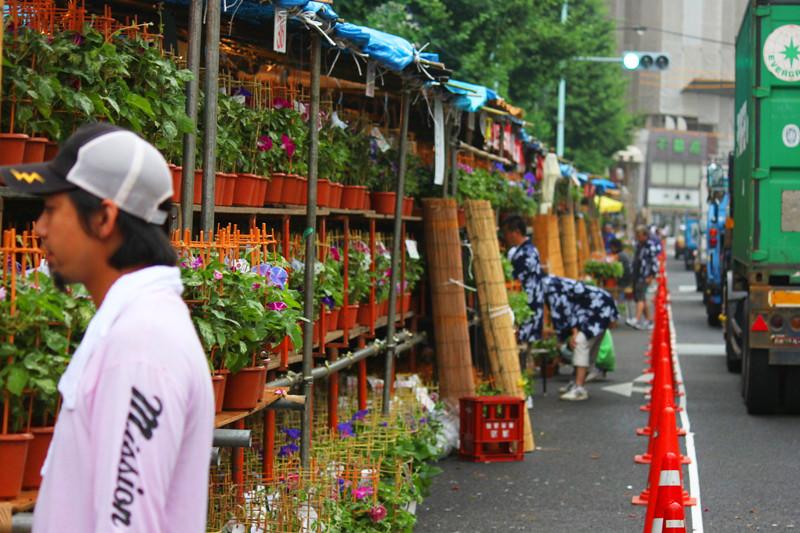 Iriya Asagao Ichi (morning glory fair)