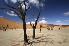 Dead Vlei (Lachlan Towart) Tags: africa travel landscape desert dunes namibia sossusvlei deadvlei lpdesert lpdeserts