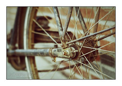 Old and Usefull (Vincent_AF) Tags: old dutch bike bicycle wheel photography cycling photo rust foto fotografie image spokes machine rusty chain cc photograph cycle creativecommons af trapper fiets roest oldbike wiel flickrphoto roestig spaken flickrimage achterwiel oudefiets flickrphotography afphotography vincentvanderpas archetypefotografie roesttinten