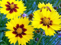 Flowers_610b