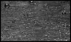Rain (Dune_UK) Tags: travel eye art water look rain liverpool joseph blog different photographer image sale sold drop photograph frame wife latex thunderstorm splash seen glynne pritchard scouser