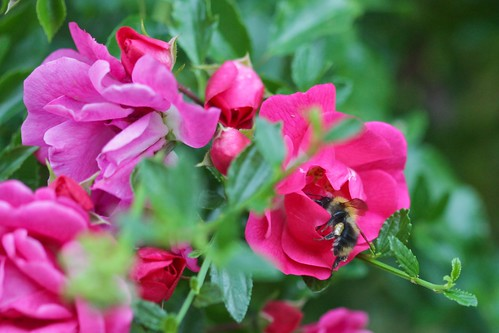Flowers And Bee - 3