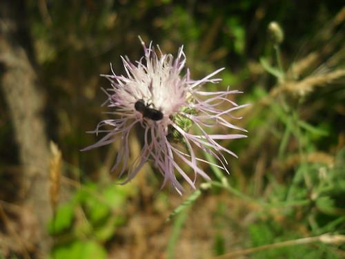 flower/bug