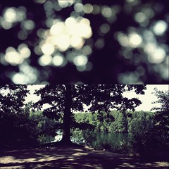 treetop (donchris!) Tags: sea sun lake macro sol up lago see soleil focus diptych dof close bokeh lac it arbres rbol sole dip albero sonne bume arbre unscharf baum nahaufnahme soce dippy diptychon jezioro drzewo drzewa unschrfe
