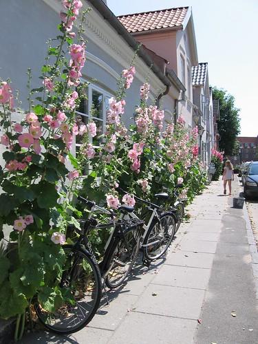 Stokkroser i Odense