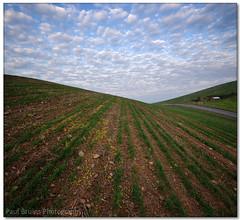 Curvy Puffy Stripy (Panorama Paul) Tags: cloudporn durbanville wheatfield nohdr sigmalenses nikfilters vertorama nikond300 wwwpaulbruinscoza paulbruinsphotography