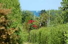 Blick auf die Ostsee (capribeach1) Tags: sea green germany see nikon sommer balticsea nikond50 ostsee nikkor70210 heiligenhafen af70210mm456d