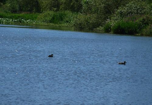 trout lake 004