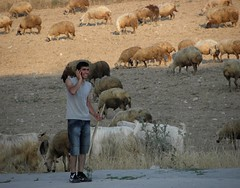 Modern Shepherd (Tulay Emekli) Tags: light shadow nature field animals mobile modern rural turkey landscape weird concentration shoes funny sheep shepherd contemporary candid traditional cellphone cell cellular tshi