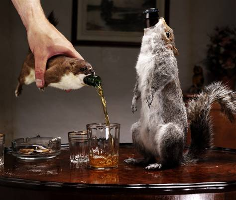 stoat-beer-1