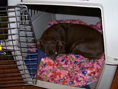 Hyzzie in the crate