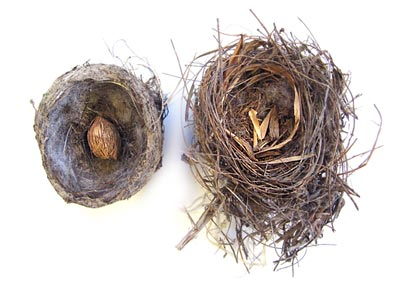A Tale of Two Nests