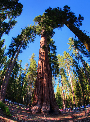 Sequoia National Park 07