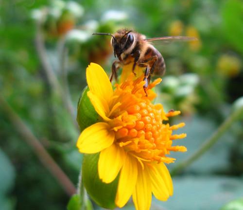 Abeja encima de una flor