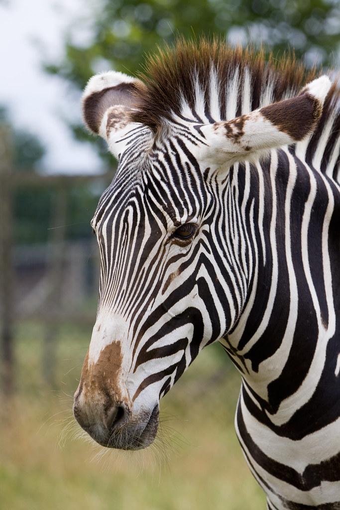 Zebra safari photography workshop
