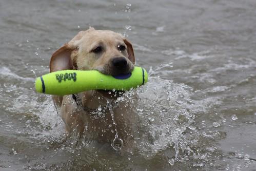 Noah's first swim!