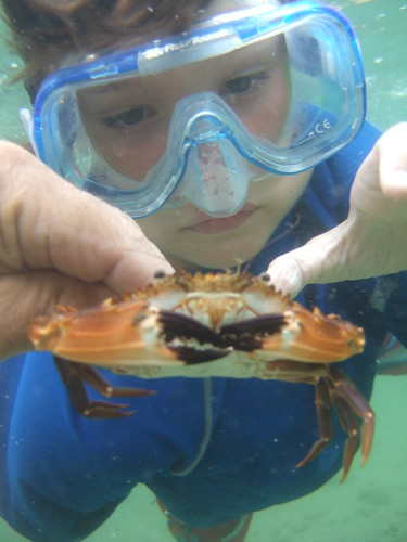 Beau checks out a swimming crab