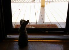 Let Me Out Please