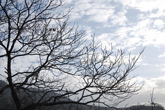 trees in the cloudy sky (venetia koussia) Tags: trees flora forests  monastiraki  orininafpaktia   greeknature  evinoslake  44  katochora