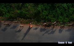 LIFE IN INDIA SERIES :: Overshadowed... (GOPAN G. NAIR [ GOPS Creativ ]) Tags: india photography shadows shepherd incredible overshadowed amazinglight gops gopan gopsorg gopangnair