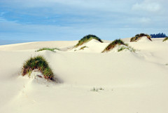 Oregon dunes national Rec area (WorldofArun) Tags: ocean flower art grass oregon florence sand nikon desert pacific or dune august hike lakeside trail oasis journey vegetation oregoncoast curve sanddunes oregondunes 2010 umpqua coosbay northbend reedsport oregondunesnationalrecreationarea nationalrecreationarea usfs tenmile winchesterbay umpquariver siuslawriver siuslaw unitedstatesforestservice d40x worldofarun eelcreek coosriver arunyenumula