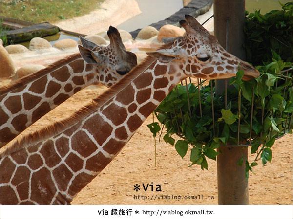 【新竹住宿】來去和動物住一晚~關西六福莊生態渡假旅館14