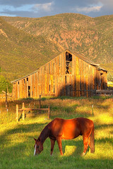 Horse Grazing at Sunset in Pine Valley, Utah (John Petrick) Tags: sunset horse mountains barn landscape utah farm farmland farmsunset earthtones oldbarn pinevalley d90 photomatix summersunset utahlandscape 18200mmvr horsegrazing ahorsewithnoname utahfarm pinevalleyut pinevalleyutah farmatsunset whitestripehorse