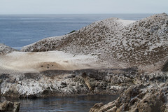 Bird Island Photo