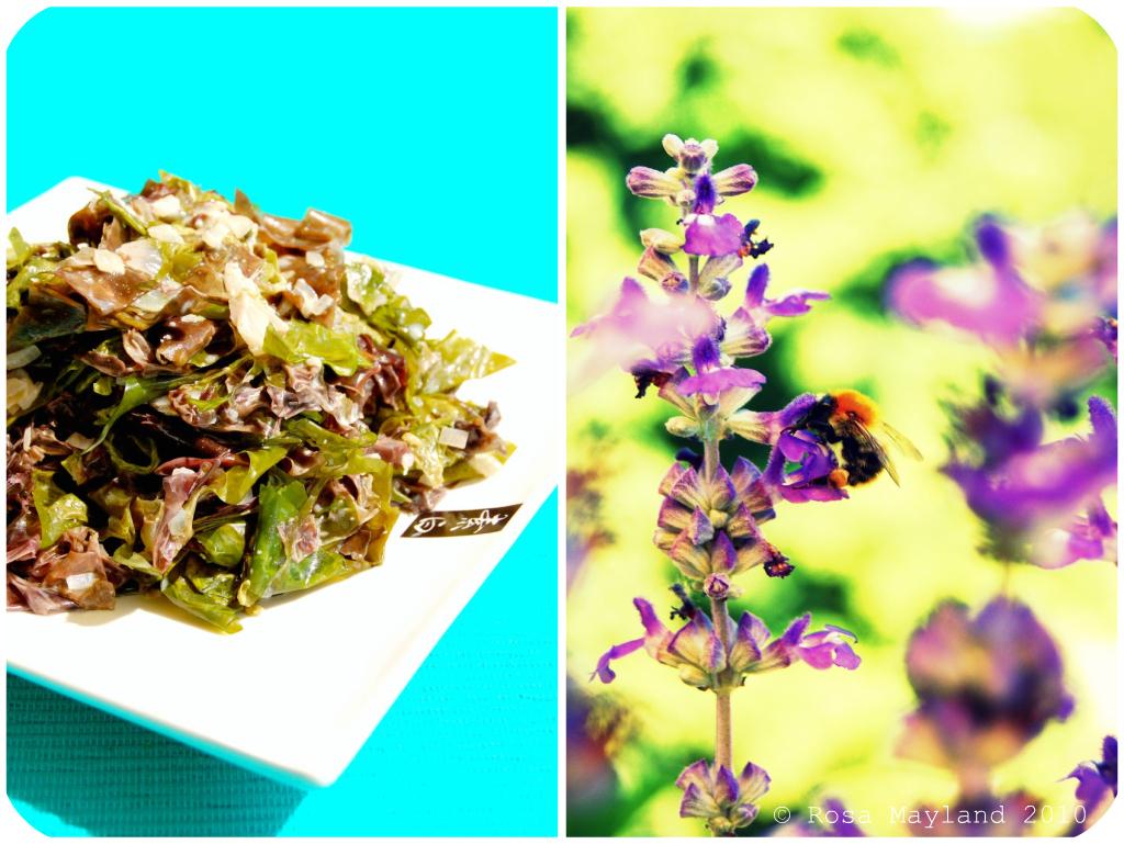 Seaweed Picnik collage 1 bis