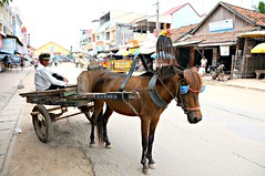 Horse as heavy duty vehicle, Neak Luoeng, Cambodia