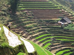 Rice terraces around Sapa