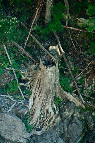 Tentacular Roots