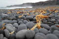 Djpalnssandur (Philipp Bunge) Tags: travel beach rock iceland wave pebble sland snfellsness djpalnssandur dritvik efs1022mmf3545usm