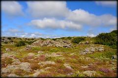 Mother Nature - Moss on Lava (Sig Holm) Tags: nature island lava iceland islandia moss heimrk sland mosi islande 2010 hraun icelandic islanda ijsland islanti slenskur  slendingar    slenskt         nggra