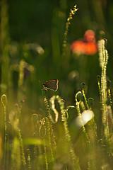 Instant (Katia SANCHEZ Photography) Tags: backlight butterfly garden nikon lumire jardin papillon contrejour