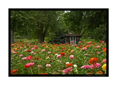 Garden Shed (LB2556) Tags: flowers trees summer garden farm shed zinnias bej