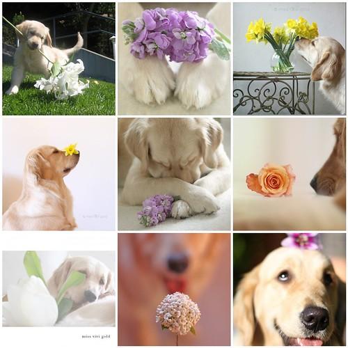 Miss ViVi's Flowers