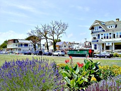 Ocean Grove Fire Aftermath (LancerE) Tags: ocean flowers fire hotel moss newjersey aftermath grove nj vine damage monmouthcounty bedandbreakfast remains burned rubble charred oceangrove firedamage deadtrees hotelfire oceanpathway burnedhotel